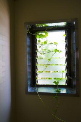 オーニング窓